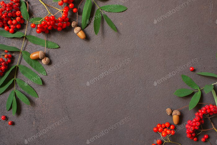 Autumn Background with Rowan and Acorns