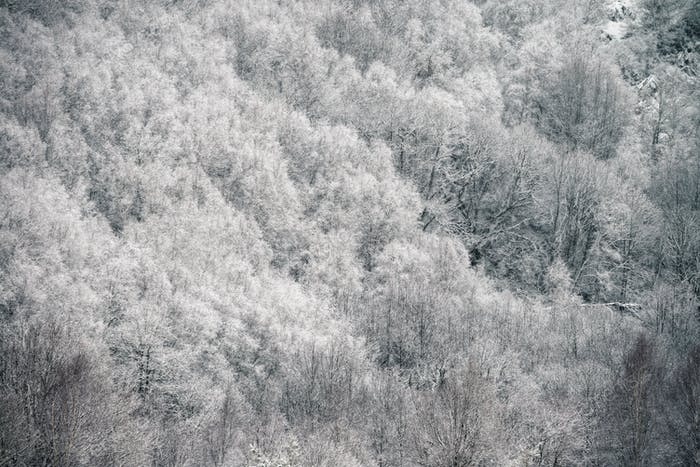 Hoar Frost freezes the bare branches of trees in the forest