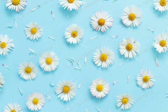 Weiße Gänseblümchen auf hellblauem Hintergrund
