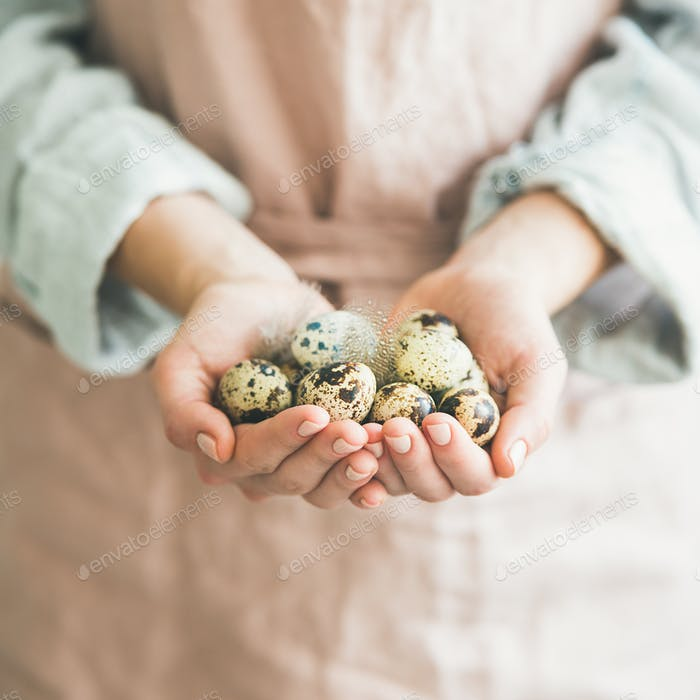 Quail eggs and feather in woman's hands for Easter
