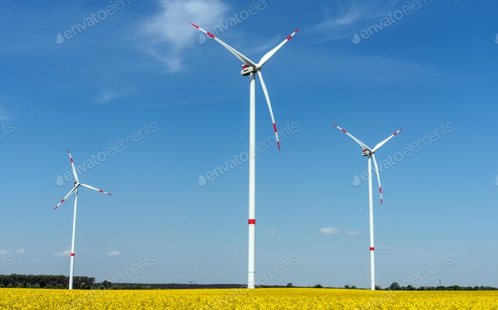 Blooming oilseed rape with wind energy plants