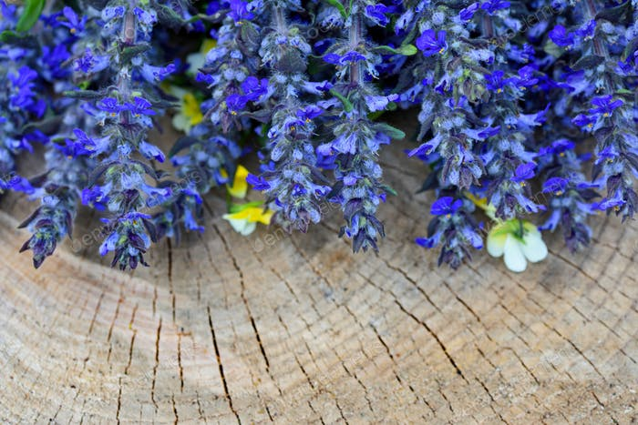 Ajuga reptans flowers on a wooden background
