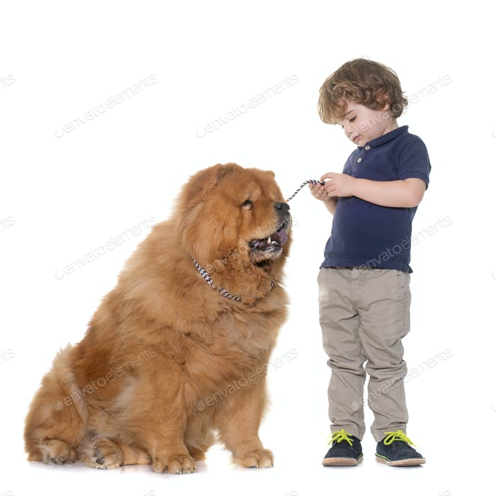 chow chow dog and little boy