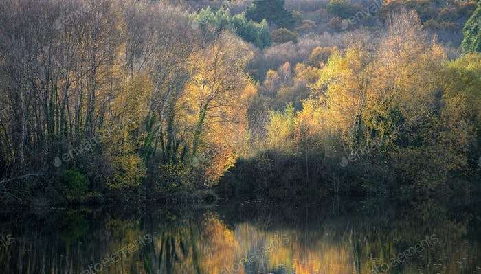 Golden Autumn Foliage in the Forests around the Lagoon