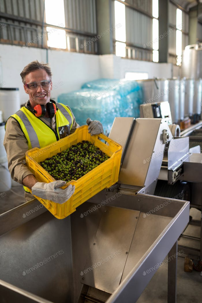Portrait of happy worker putting harvested olive in machine