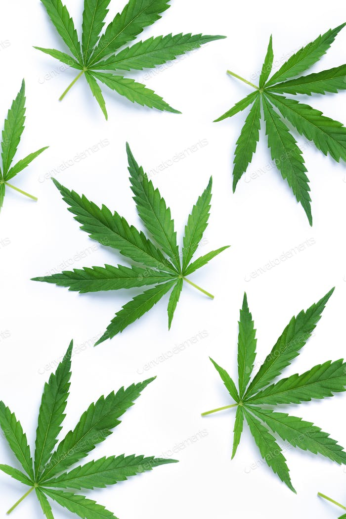Green hemp leaf isolated on white background. Top view, copy space. Close up of cannabis leaf