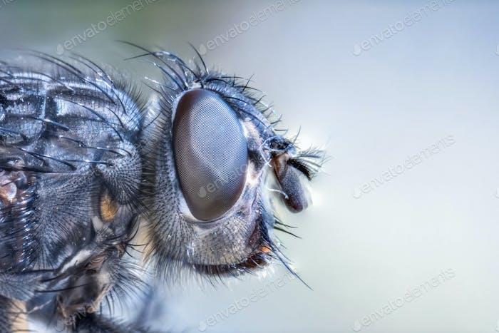 fly eye closeup