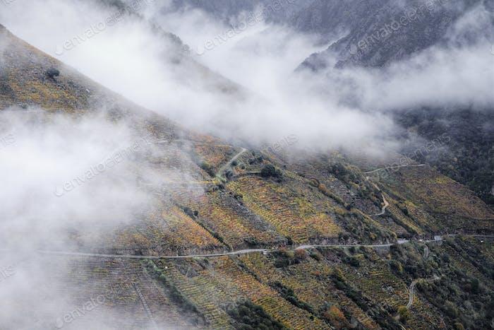 Dense fog banks between the Vine Plant covered slopes