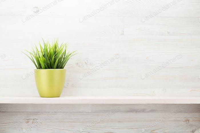 Topfpflanze auf Regal