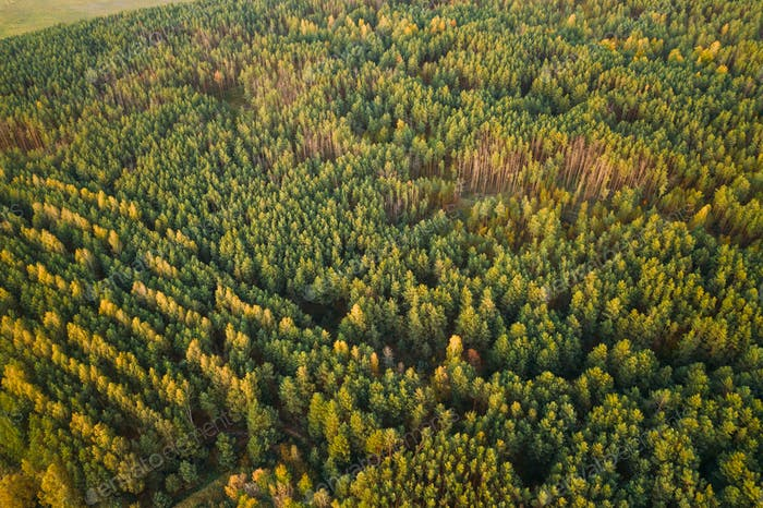 Aerial View Of Green Forest Landscape. Top View From High Attitude In Autumn Evening. Natural