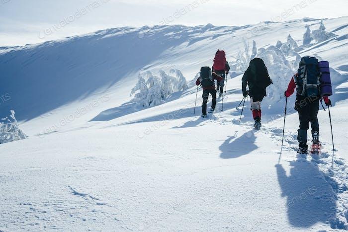 Viajeros escalando montañas de Gorgany en nieve profunda
