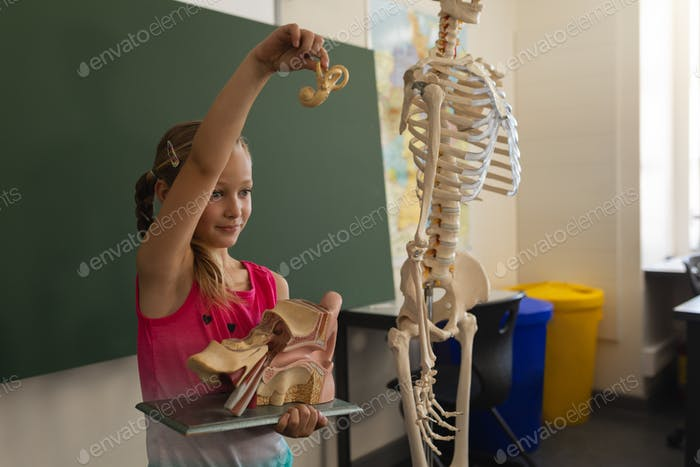 Side view of schoolgirl explaining anatomical model in classroom of elementary school