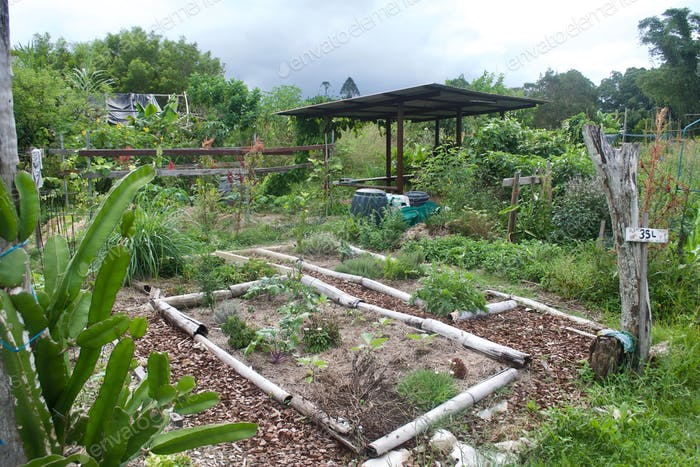 Permaculture Allotment Garden