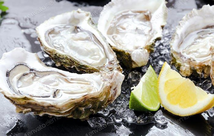 Set von geöffneten Austern