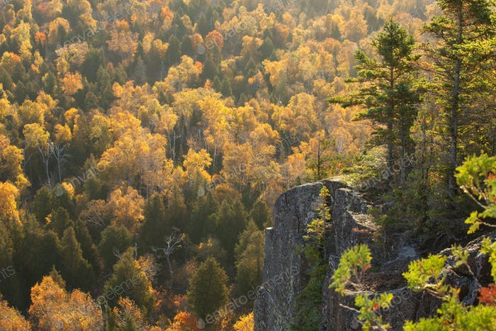 Backlit Cliff with Trees in Autumn Color