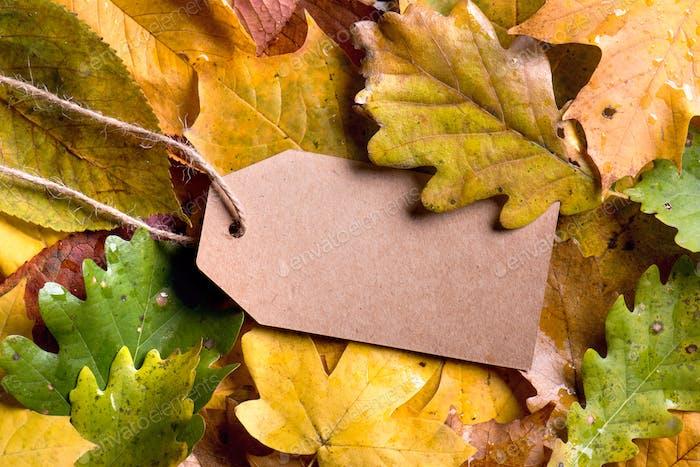 Autumn leaf composition, paper tag. Studio shot, wooden back
