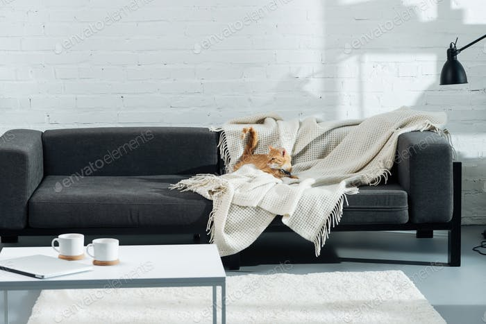 cute domestic ginger cat lying on sofa in living room
