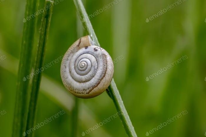 sleeping in shell