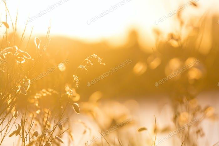 Sonnenwiese