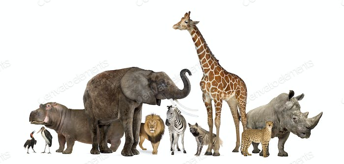 Collection of wildlife animals, isolated on white
