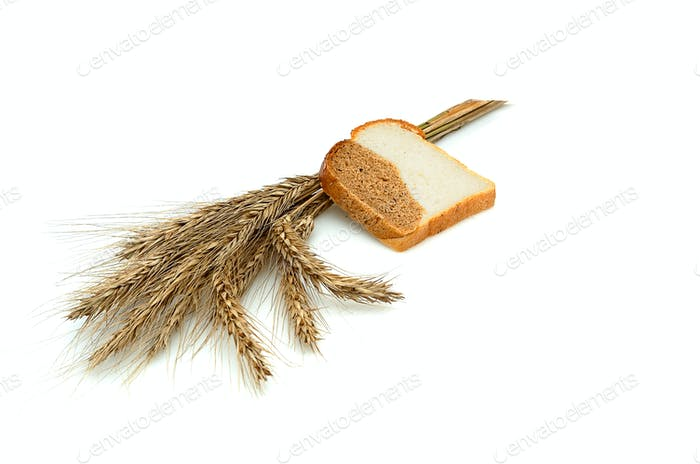 Spike and bit of bread.