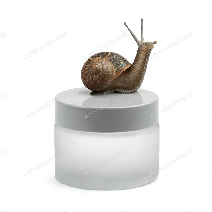 Snail-slime face cream in a pot