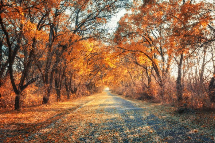 Autumn forest. Forest with country road at sunset