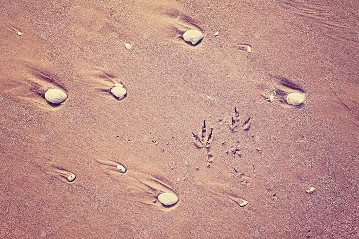 Color toned picture of seagull prints on sand