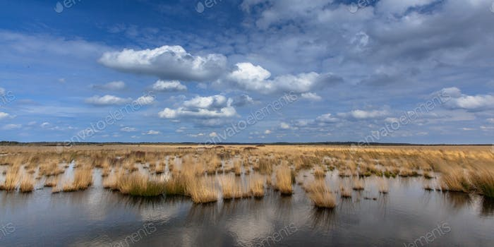 White clouds above raised bogs swamp