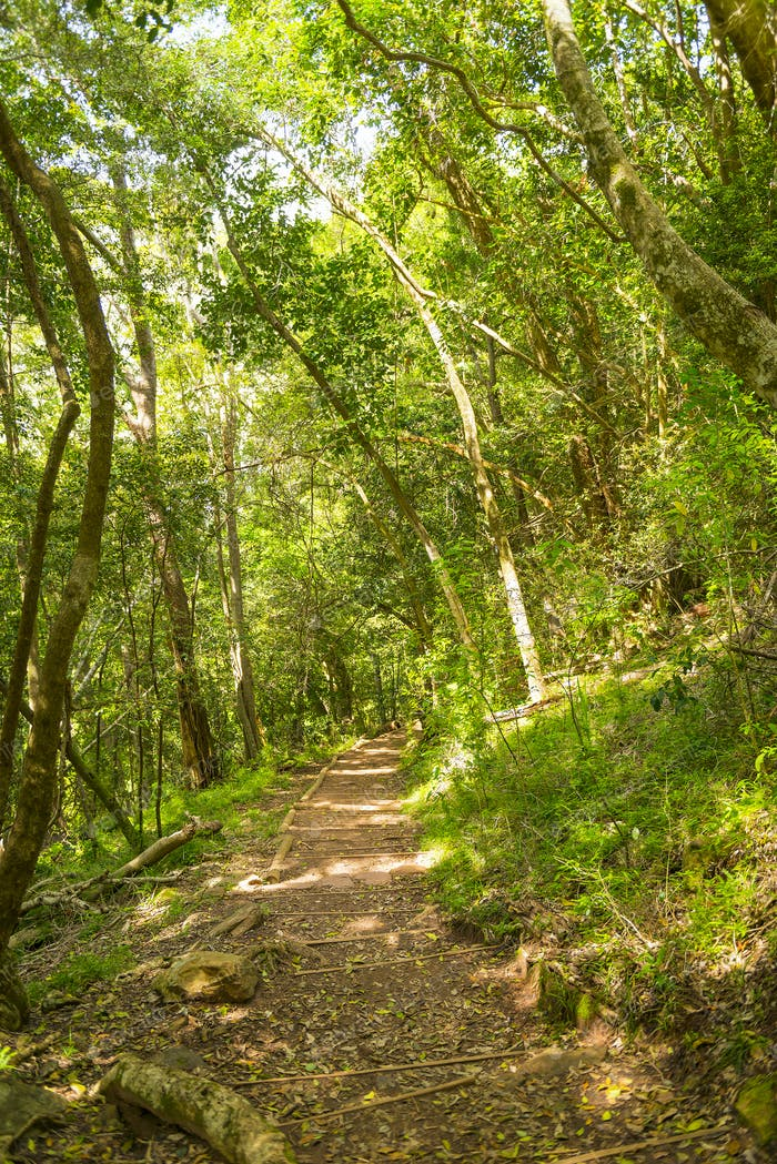 Table Mountain Walking Track