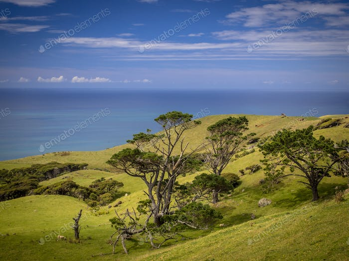 New Zealand landscape green hills and sea