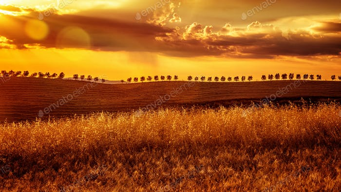 Yellow sunset over farmland