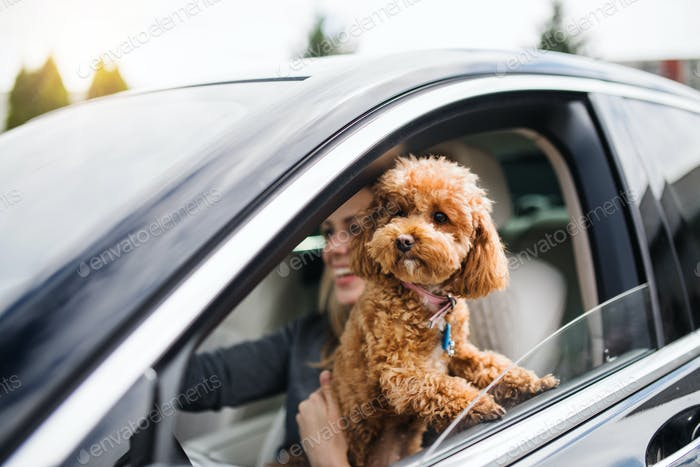 Young woman driver with a dog sitting in car, driving.