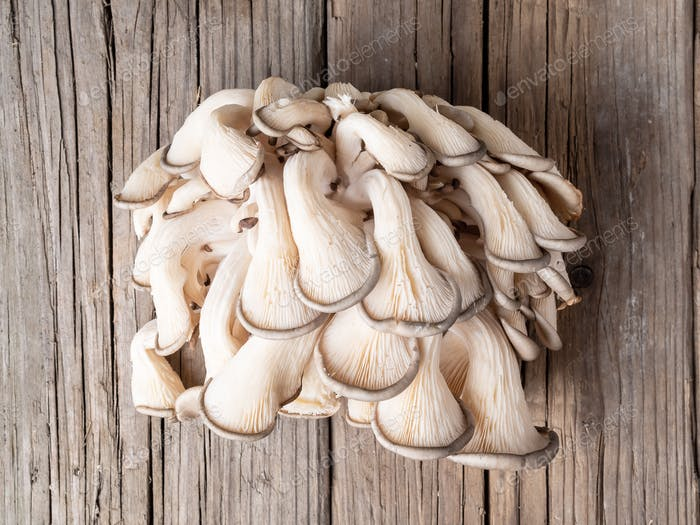 edible mushroom oyster mushroom on old rustic wooden table, top view