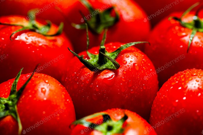 Red tomatoes with water drops