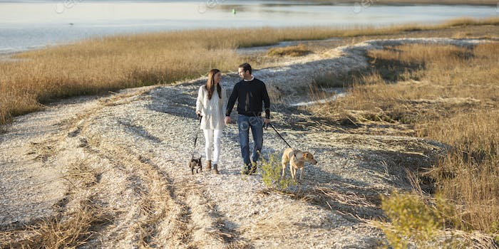 Couple walking dogs on the shore