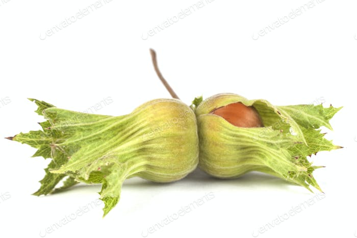 Green Hazelnut Shell