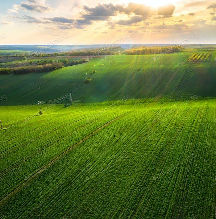 Green rolling field in golden hour