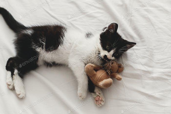 niedliches kleines Kätzchen spielt mit kleinen Teddybären Spielzeug