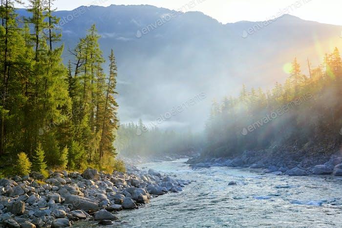 Sunny Morning in Siberian dark coniferous Taiga