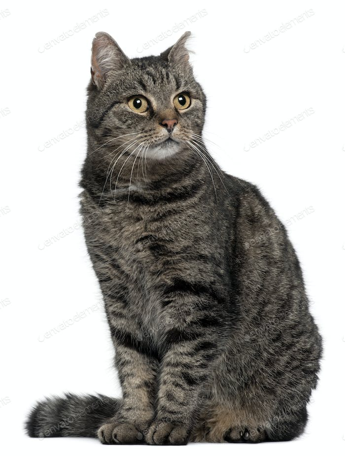 Cross breed cat, 7 months old, sitting in front of white background