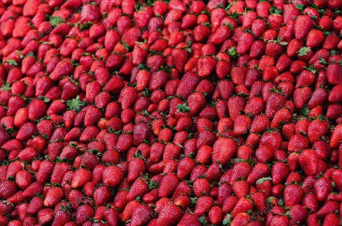 Fresh strawberries background. Copy space. Harvest. Food frame and banner