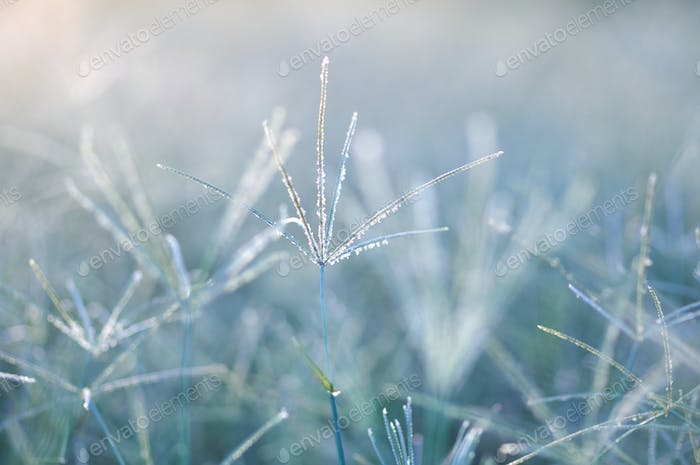 Grass in the early winter