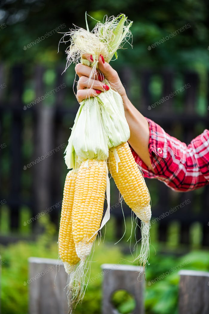 Casual young woman holding corn cob in garden