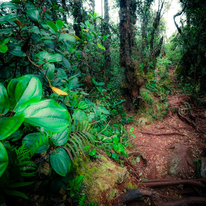Mysterious vegetation of tropical rainforest