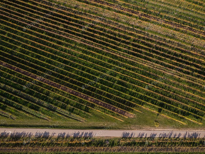 Rural road in vineyards, drone view from above