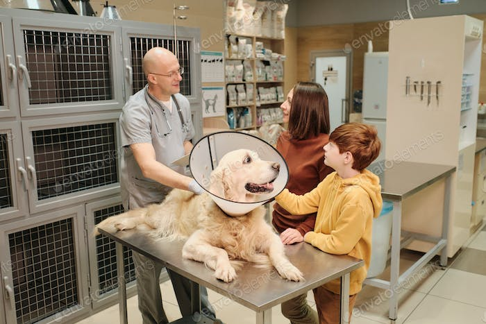 Consultation with veterinarian