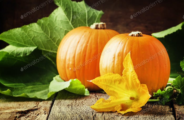 Autumn harvest of pumpkins with flowers and leaves, old wooden table