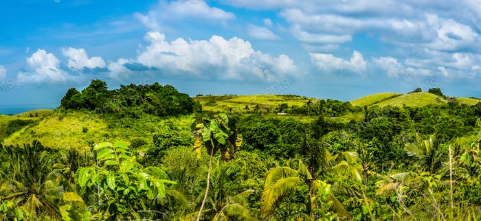 Fresh Yellow coloured Hills with some Jungle between, Nusa Penida Island, Bali, Indonesia
