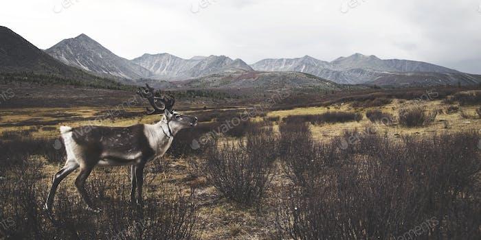 Deer Beautiful Nature Scenic Animal Wildlife Rural Concept
